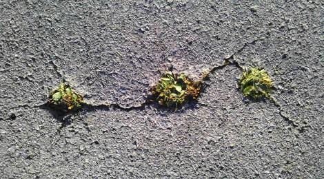 Vegetación espontánea en nuestras ciudades